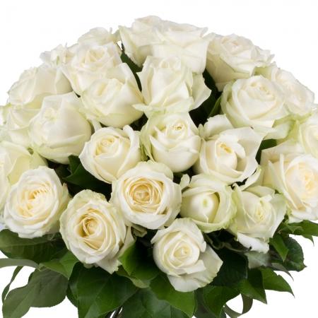 Buchet de 35, Trandafiri, Albi, Verdeață