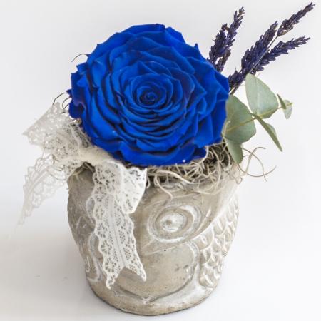 Trandafir albastru antic