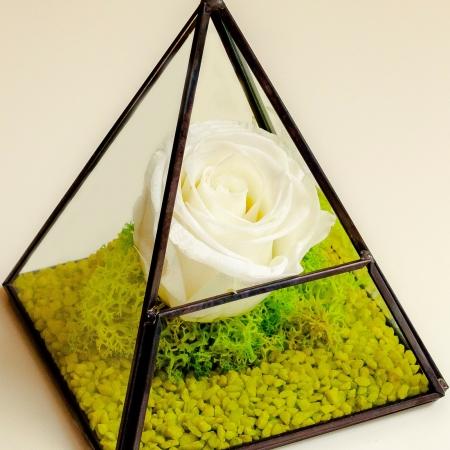 Trandafir criogenat piramida