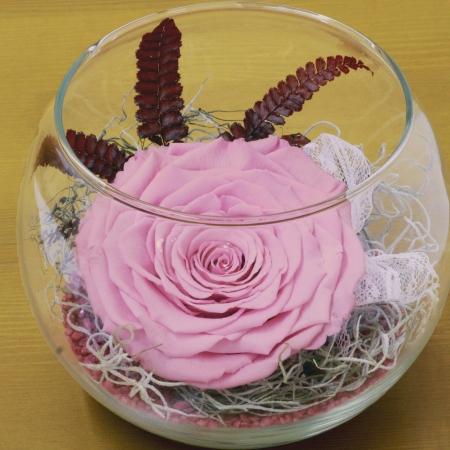 Trandafir criogenat roz bol