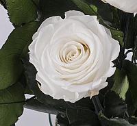 5 Trandafiri Criogenati Albi in vas de sticla 4