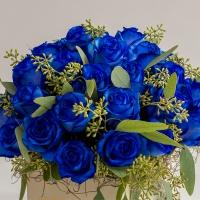 Cutie-albastra 4