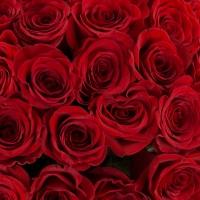 Buchet de 101 Trandafiri Roșii Premium. Comandă online 101 trandafiri roșii calitatea I. 4
