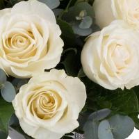 Buchet de 15 Trandafiri albi 4