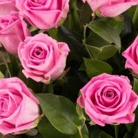 Buchet de 19 Trandafiri roz 4