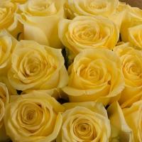 Buchet de 25 Trandafiri galbeni 4