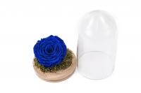 Cupola Sticla Trandafir Criogenat Albastru 3