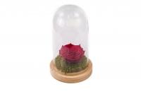Cupola Sticla Trandafir Criogenat Rosu 4
