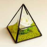 Trandafir criogenat piramida 2