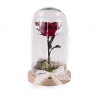 Trandafir criogenat rosu cu codita 4