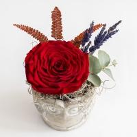 Trandafir rosu antic 4