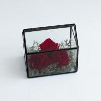 Trandafiri la casa lor 2