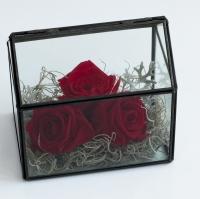 Trandafiri la casa lor 3