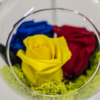 Tricoloratul 3