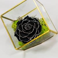 Trandafir-negru-criogenat  4