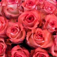 Buchet de 25 Trandafiri corai 4