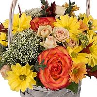 Cos cu trandafiri, miniroze, trahelium si crizanteme,  3
