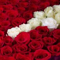 Cutie cu trandafiri roșii și albi  3