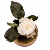 Trandafir Criogenat alb cu tija 2