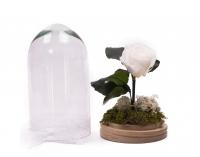 Trandafir Criogenat alb cu tija 3