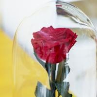 Trandafir criogenat cu muschi 3