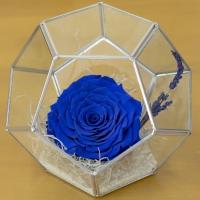Trandafir criogenat octogon 4