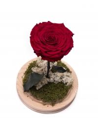 Trandafir criogenat rosu cu codita 2
