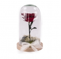 Trandafir criogenat rosu cu codita 3
