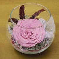 Trandafir criogenat roz bol 2