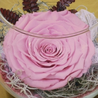 Trandafir criogenat roz bol 4