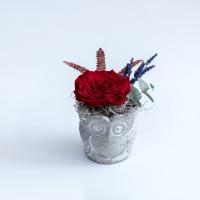 Trandafir rosu antic 2