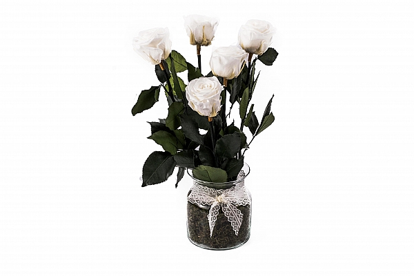 5 Trandafiri Criogenati Albi in vas de sticla