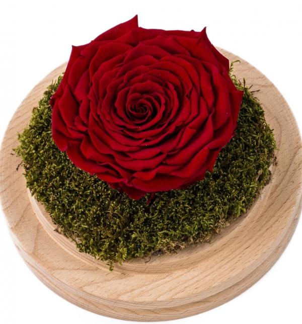 Cupola Sticla Trandafir Criogenat Rosu