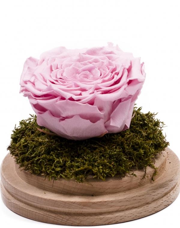 Trandafir criogenat roz în cupolă de sticlă. Trandafir nemuritor, preț accesibil. Cadou floral unic. Comandă online trandafir criogenat cupola sticla.