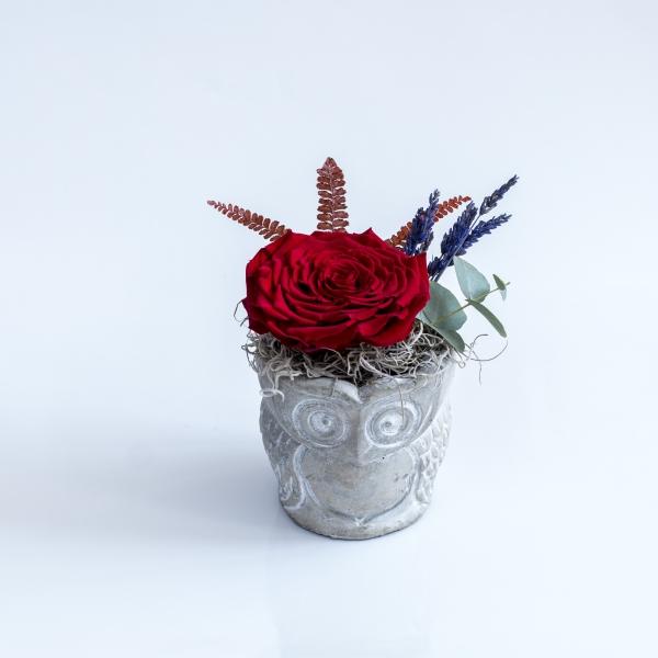 Trandafir rosu antic
