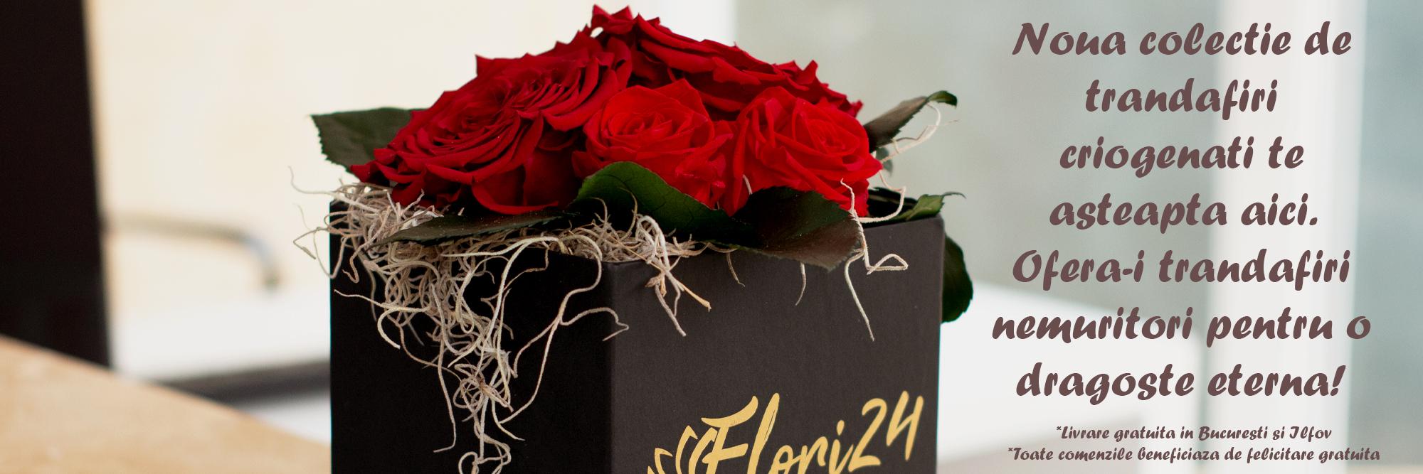 Flori24 - Trandafiri Criogenati