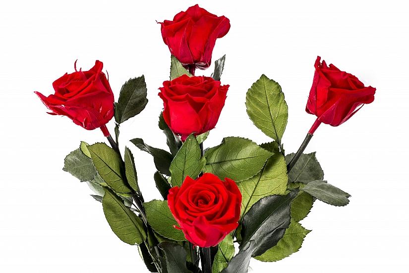 5 Trandafiri Criogenati Rosii in vas de sticla