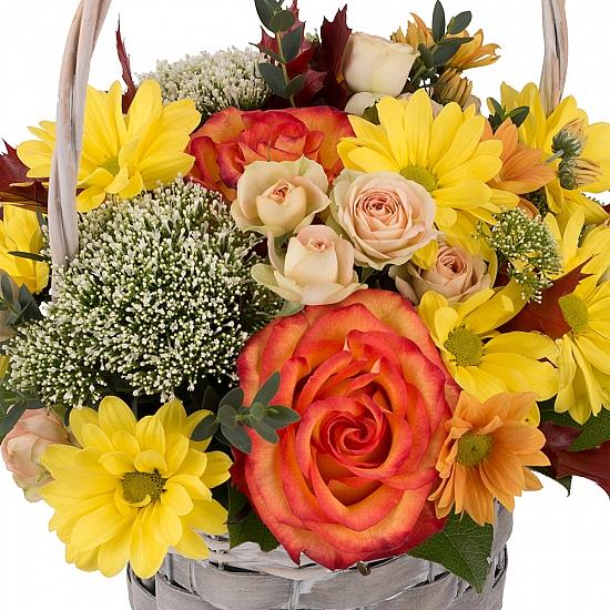 Cos cu trandafiri, miniroze, trahelium si crizanteme,