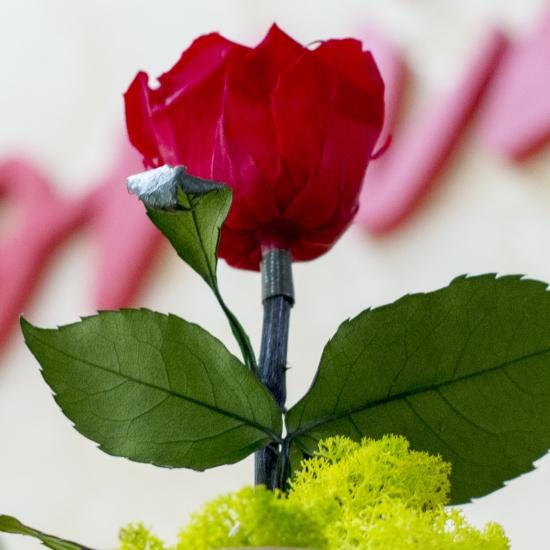 Trandafir criogenat cu muschi