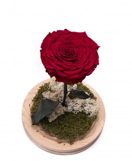 Trandafir criogenat rosu cu codita
