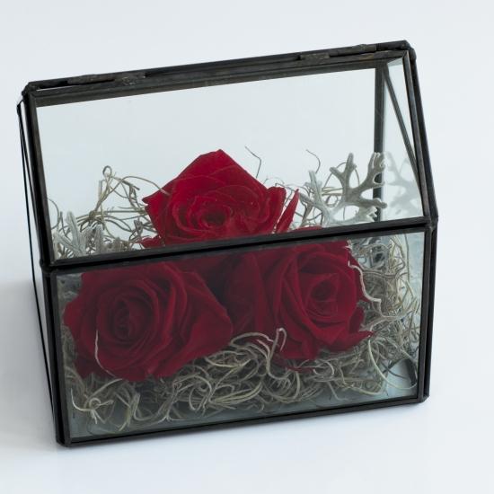 Trandafiri la casa lor